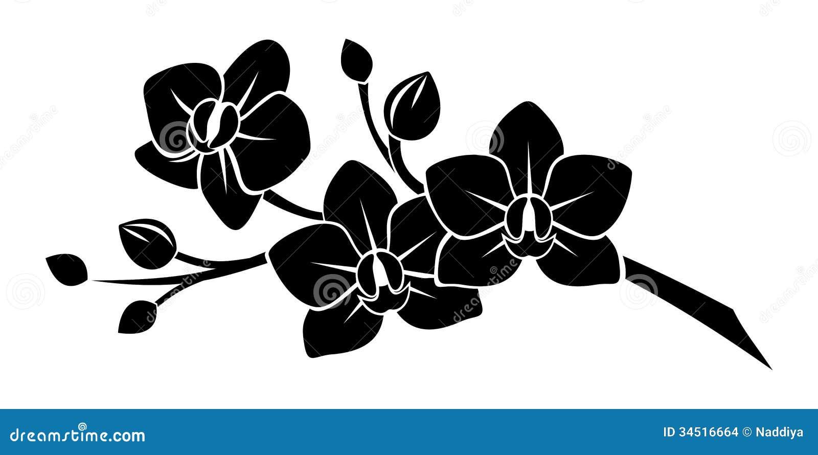 silhouette noire des fleurs d'orchidée. images stock - image: 34516664
