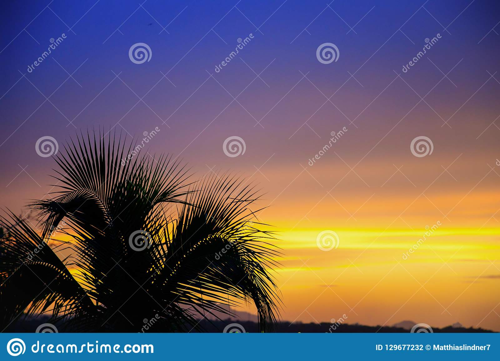 Silhouette of a palm tree in front of an orange and purple sunse
