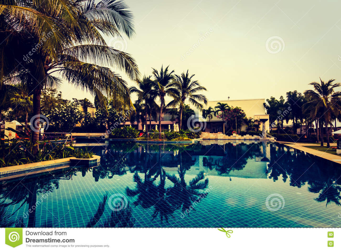 Silhouette Palm Tree On The Swimming Pool Stock Photo Image 73122301