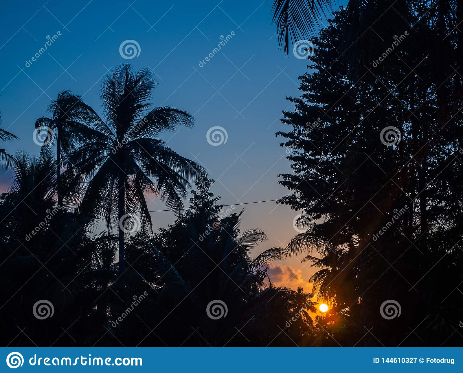 Silhouette of palm trees at sunset and multicolored clouds