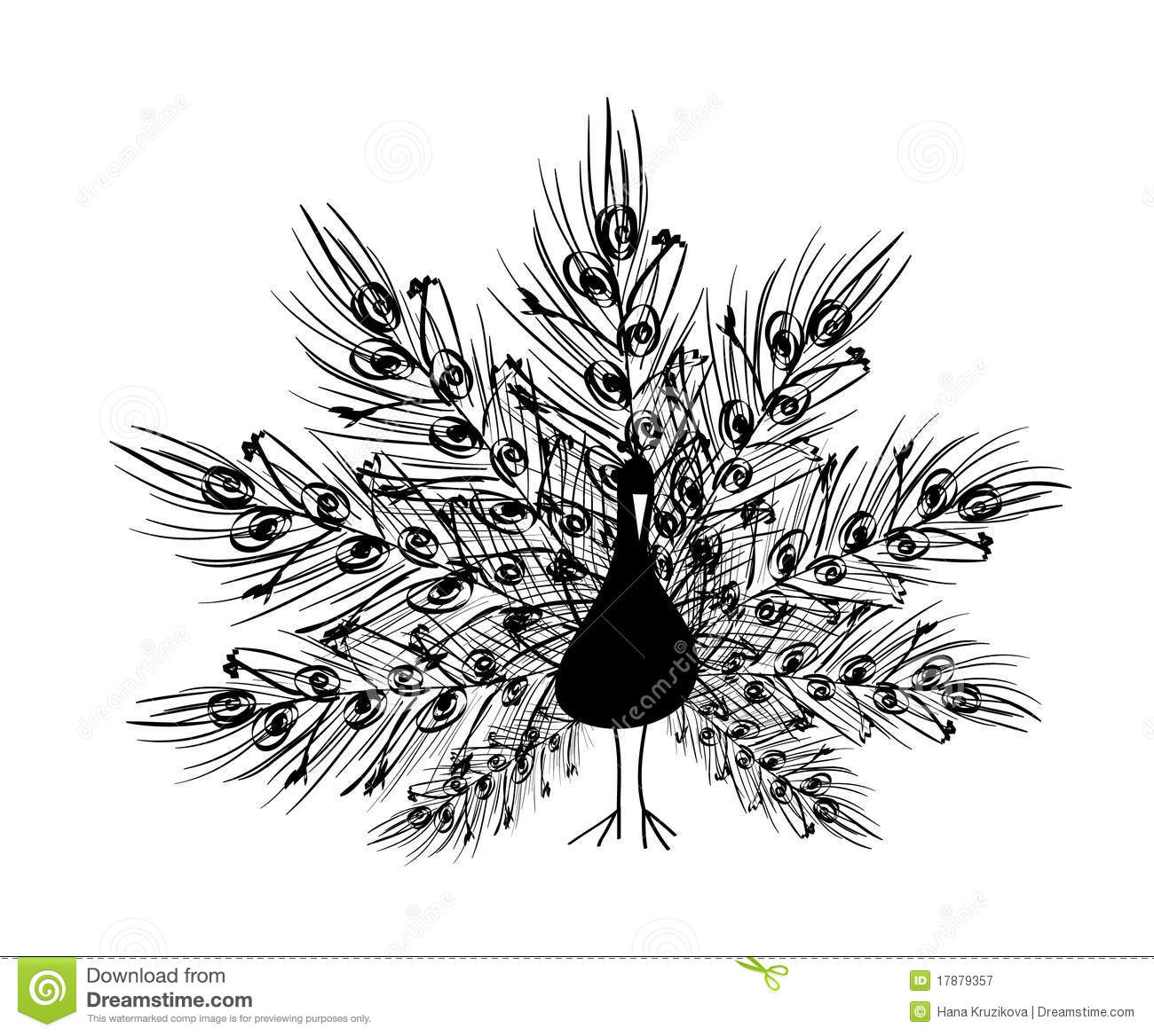 peacock drawing black and white