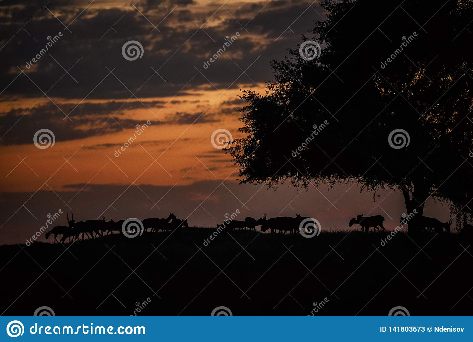 Silhouette of a saiga at sunset. Saiga tatarica is listed in the Red Book