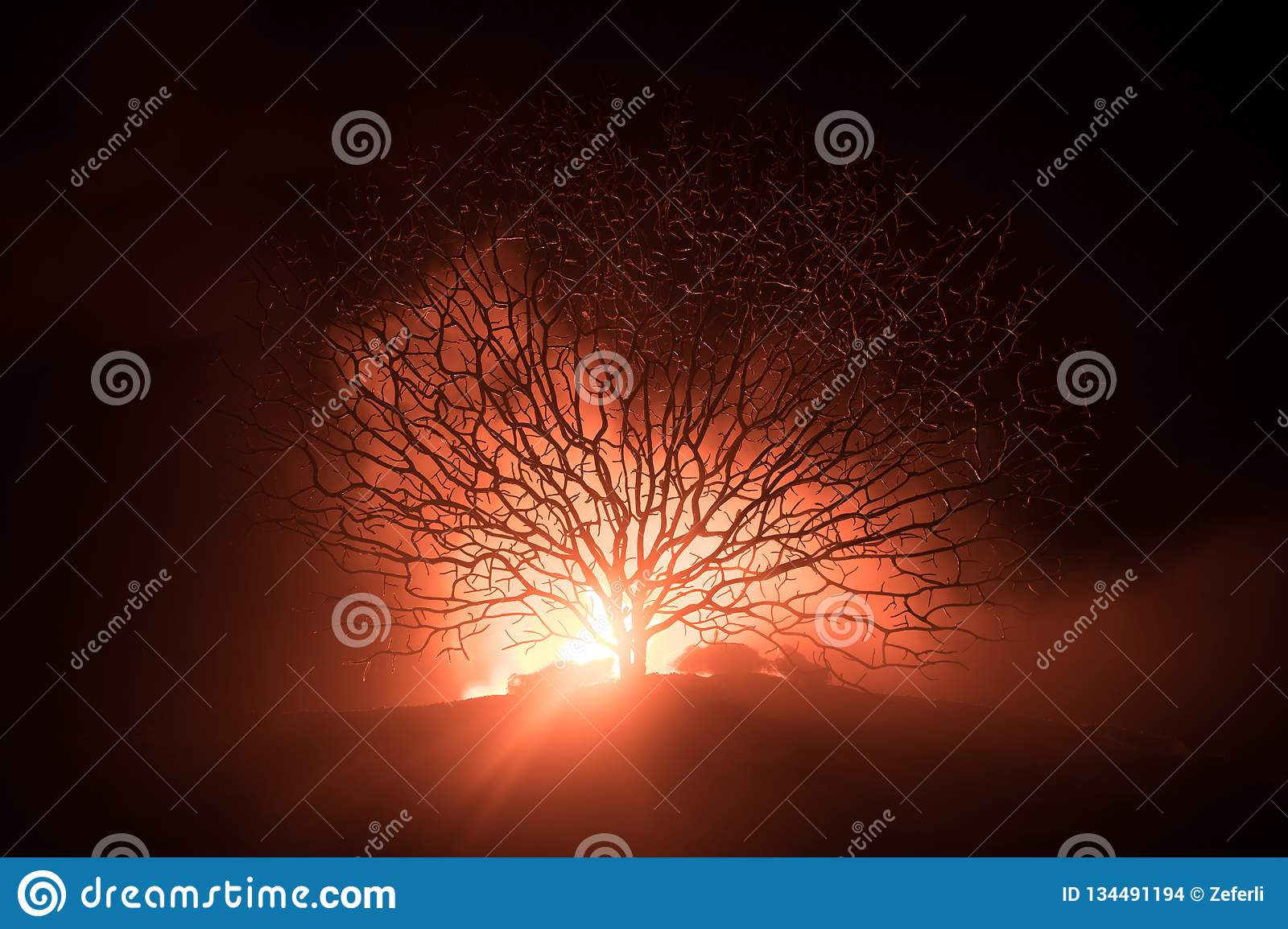 Silhouette of scary Halloween tree with horror face on dark foggy toned fire. Scary horror tree Halloween concept