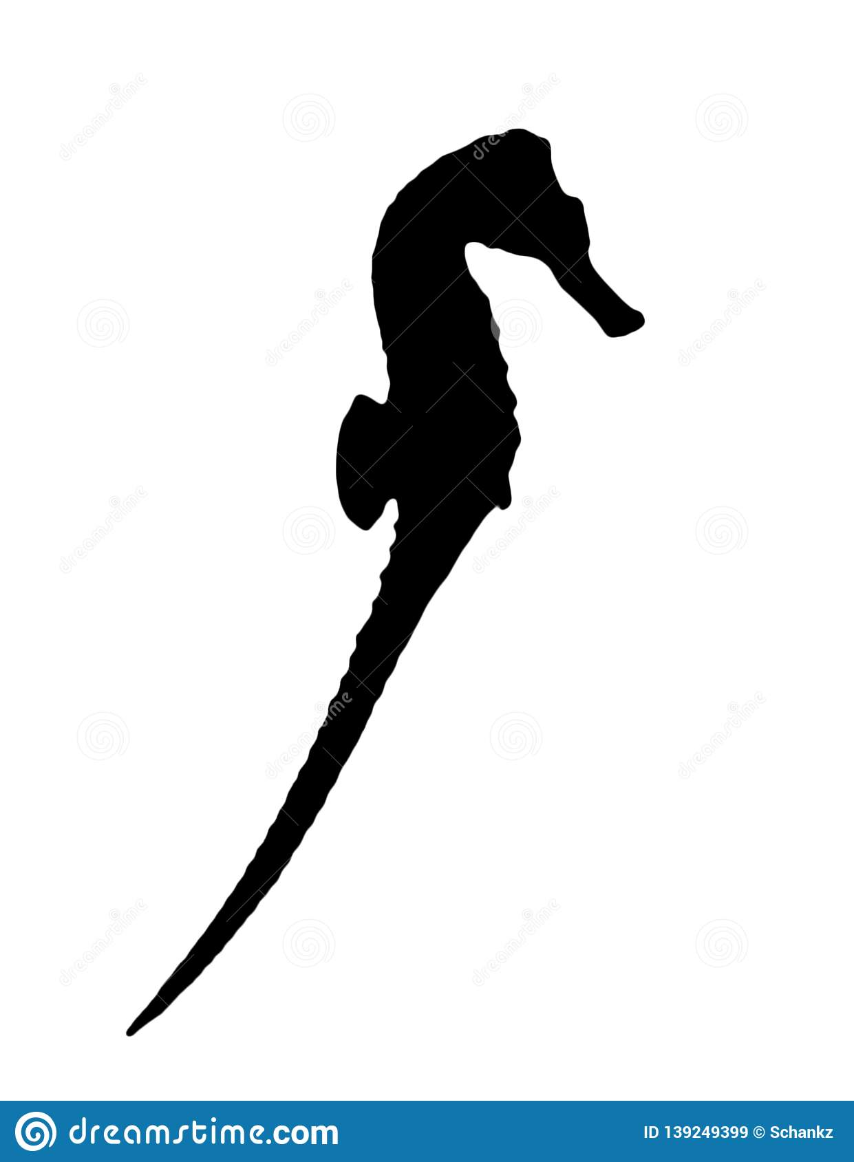 Silhouette of sea horse on white background