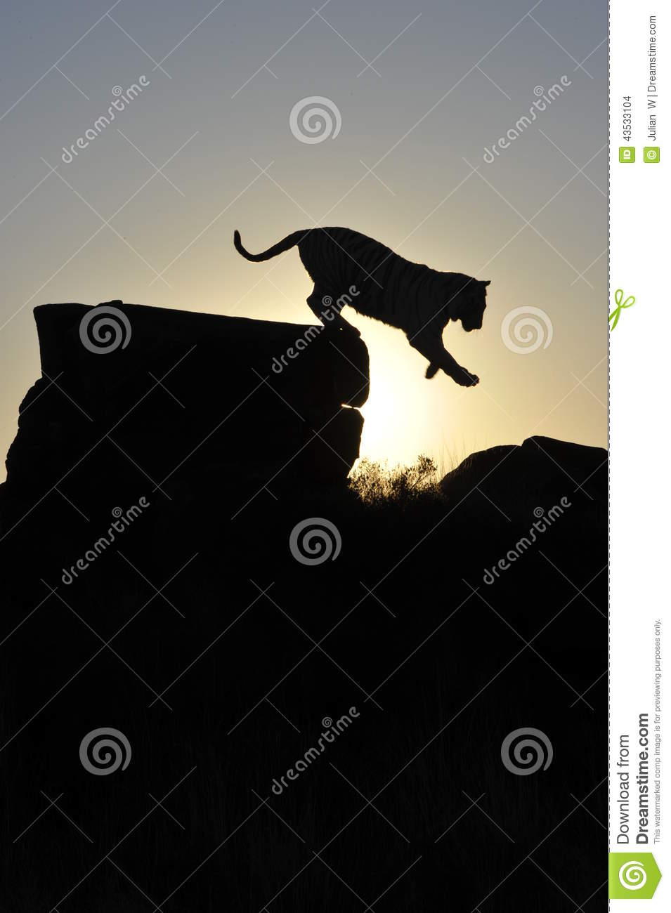 Silhouette shot of a tiger
