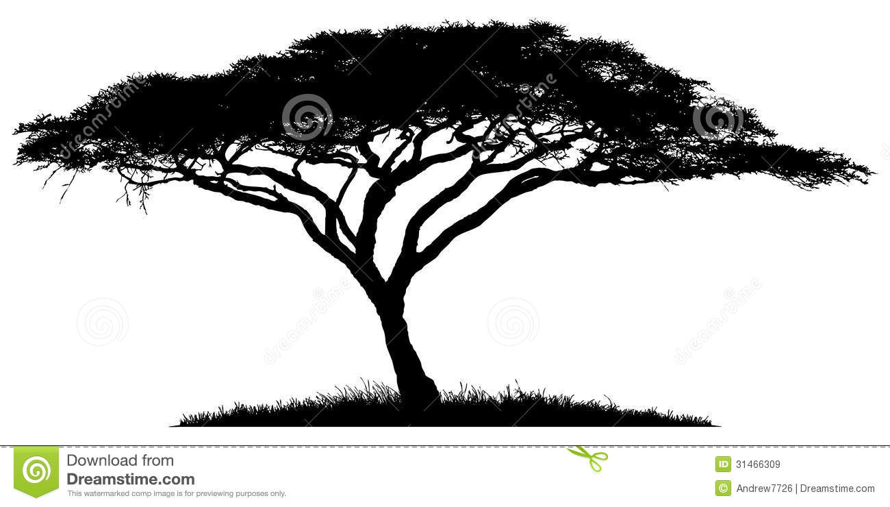 Silhouette of the tree-acacia