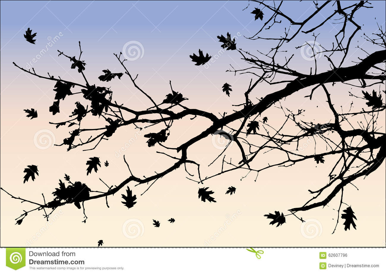 silhouette of tree branch and leaves stock photo image