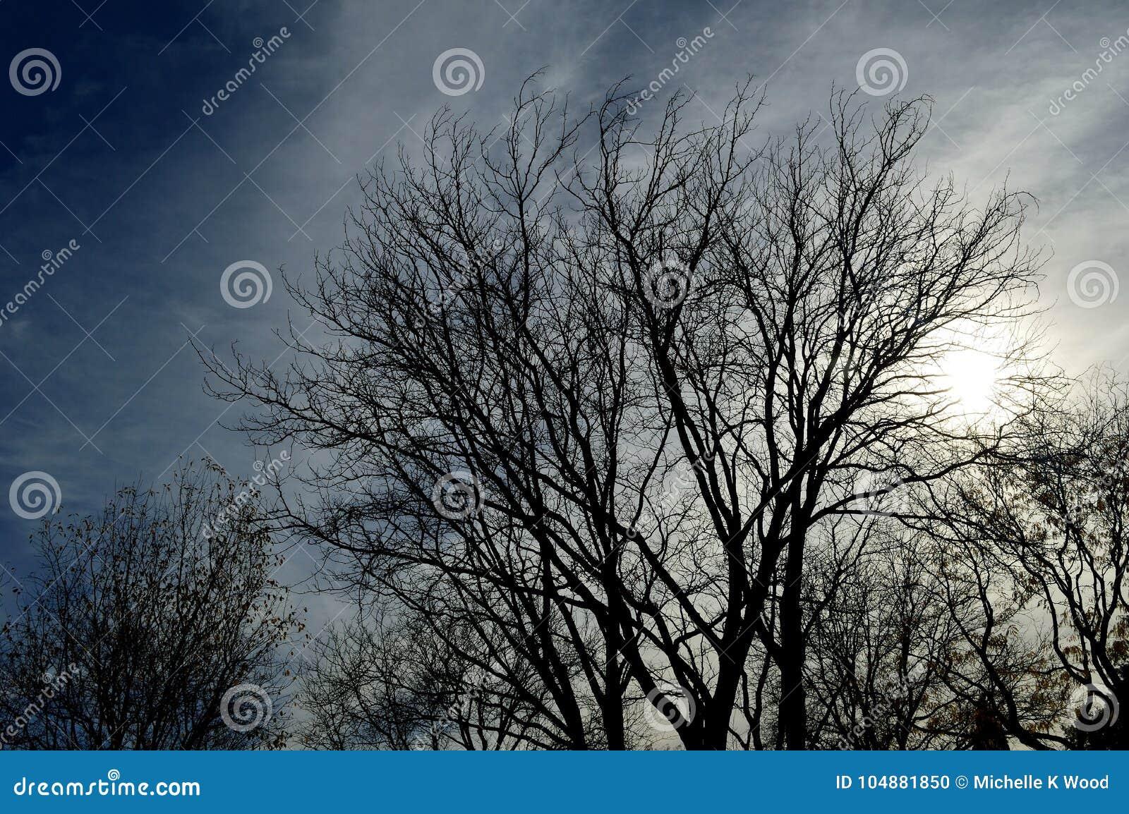 Silhouette tree cloudy stormy sky