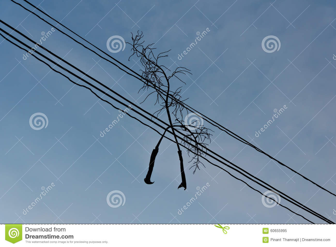 Silhouette View Of Dead Branch On The Electric Wire. Stock Image ...