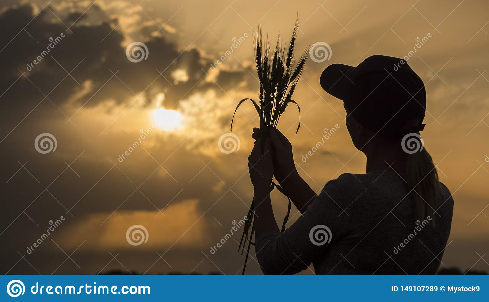 Silhouette of a young farmer looking at the ears of wheat. Back view