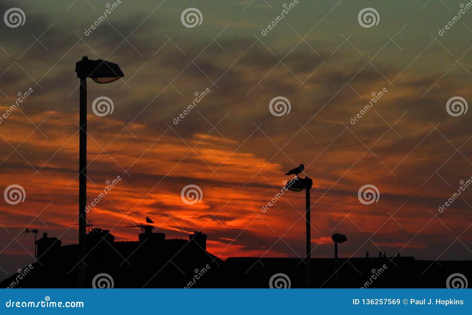 Seagulls Against The Sunrise