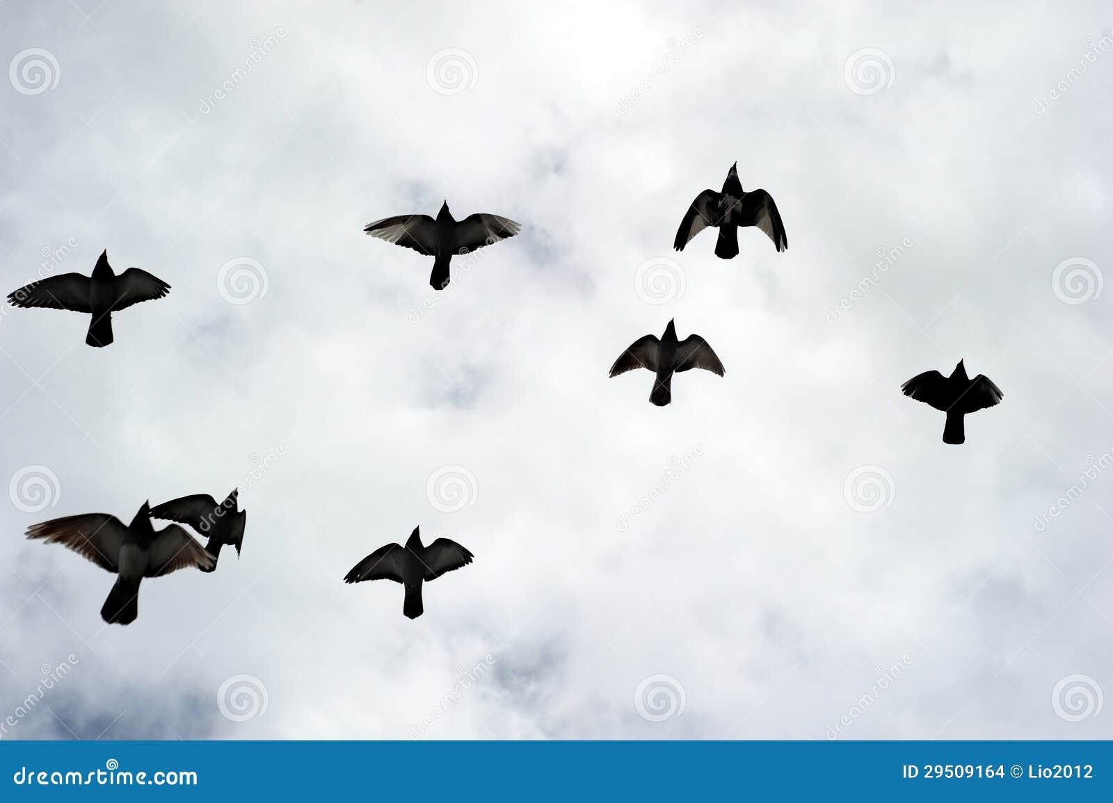 Silhouetten van een troep van vogels.