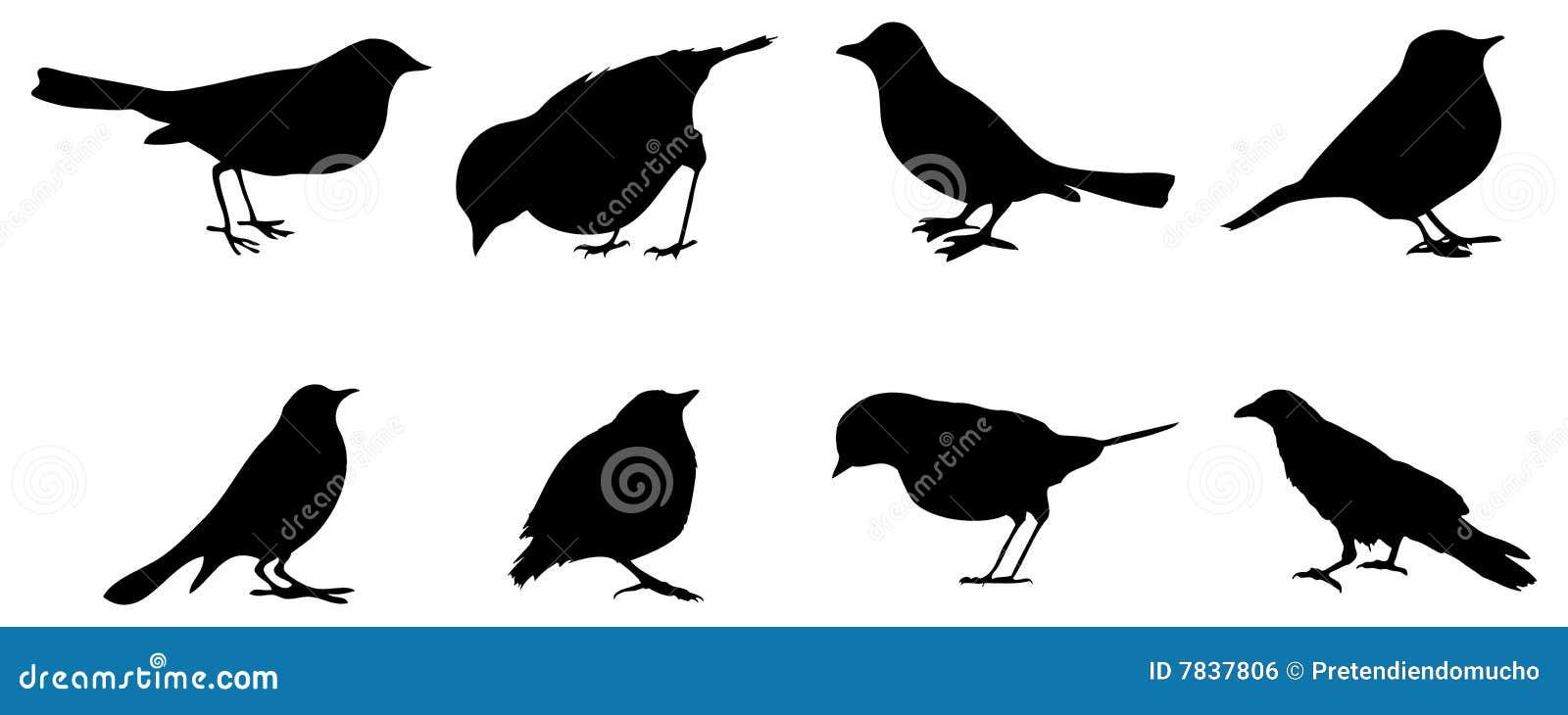 Silhouettes d oiseaux