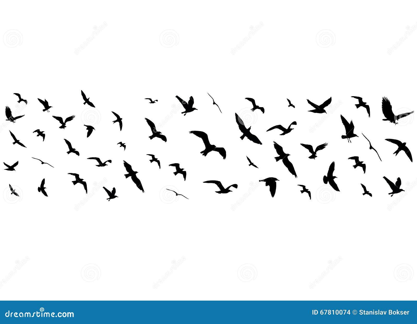 Silhouettes d 39 oiseaux de vol sur le fond blanc - Dessin oiseau en vol ...