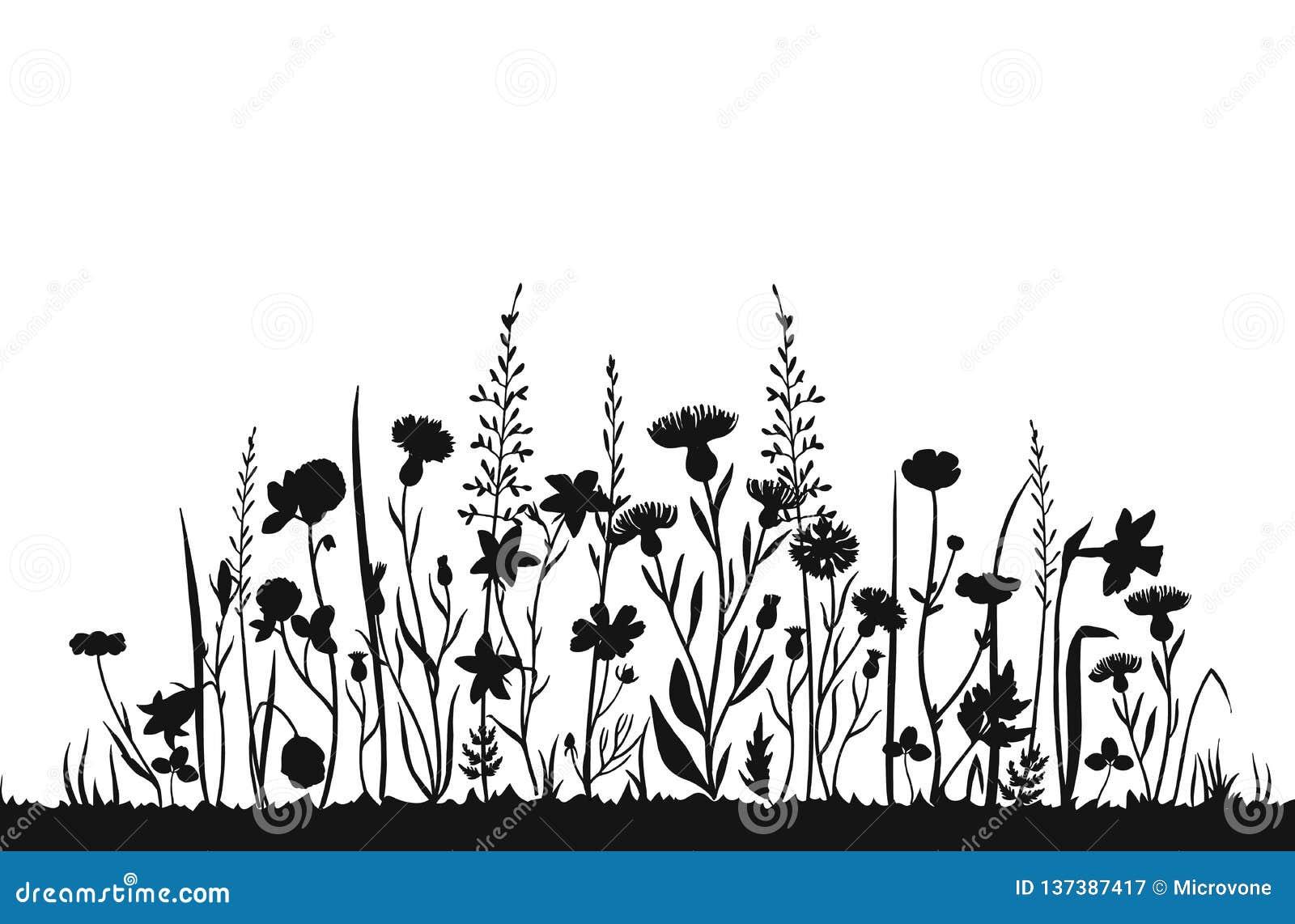 Silhouettes de Wildflower Gisement de ressort d herbe sauvage Fond de fines herbes de vecteur d été