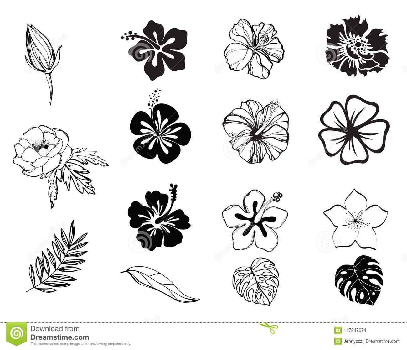 Silhouettes Of Flowers Black And White Isolated Stock Vector