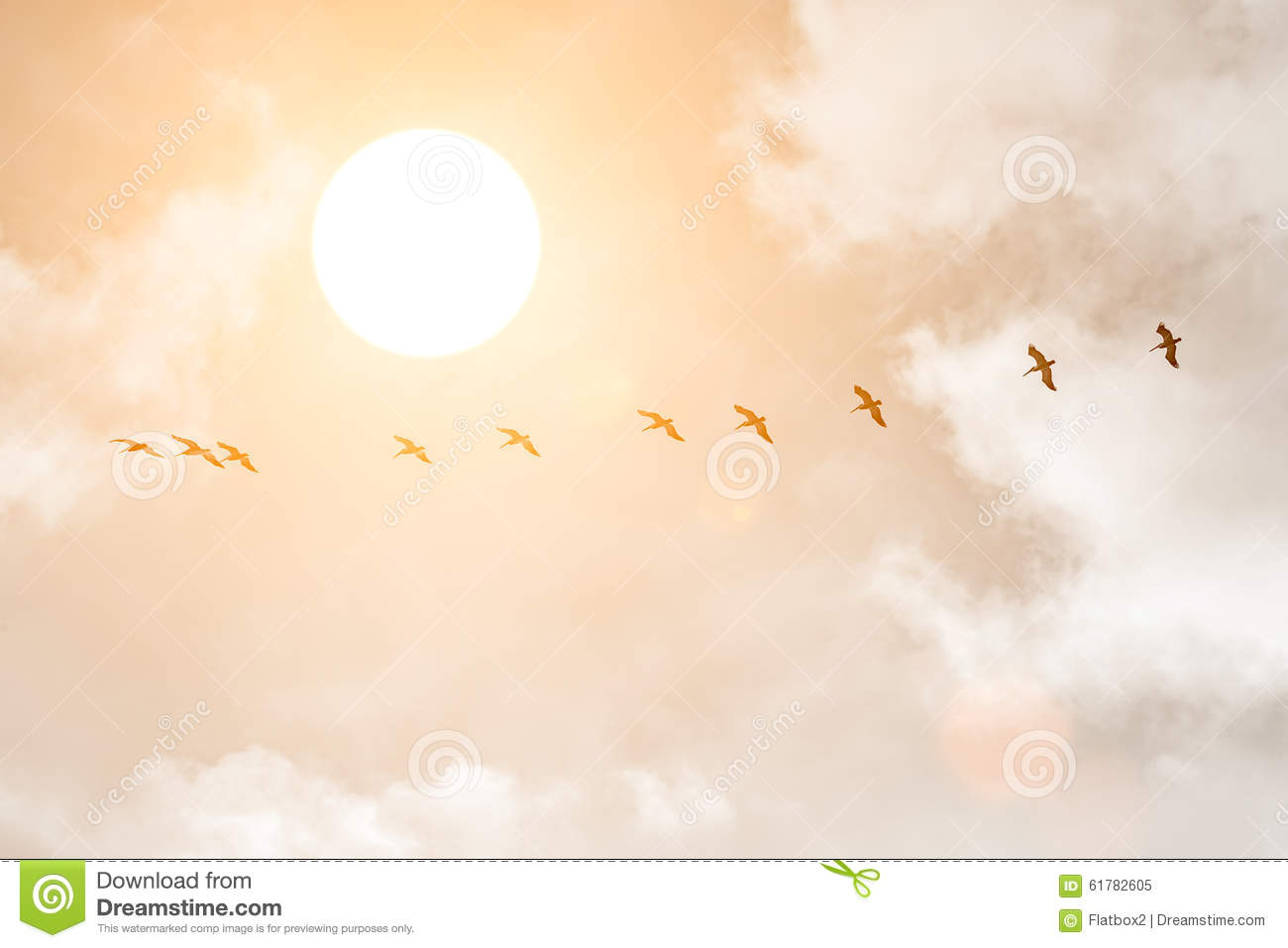 Silhouettes of Great White Pelicans at sunset