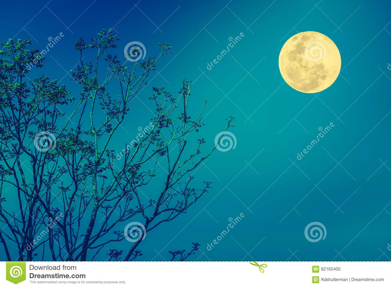 Blue Sky Full Moon But Not Blue Moon >> Silhouettes Of Tree Against Blue Sky And Beautiful Full Moon