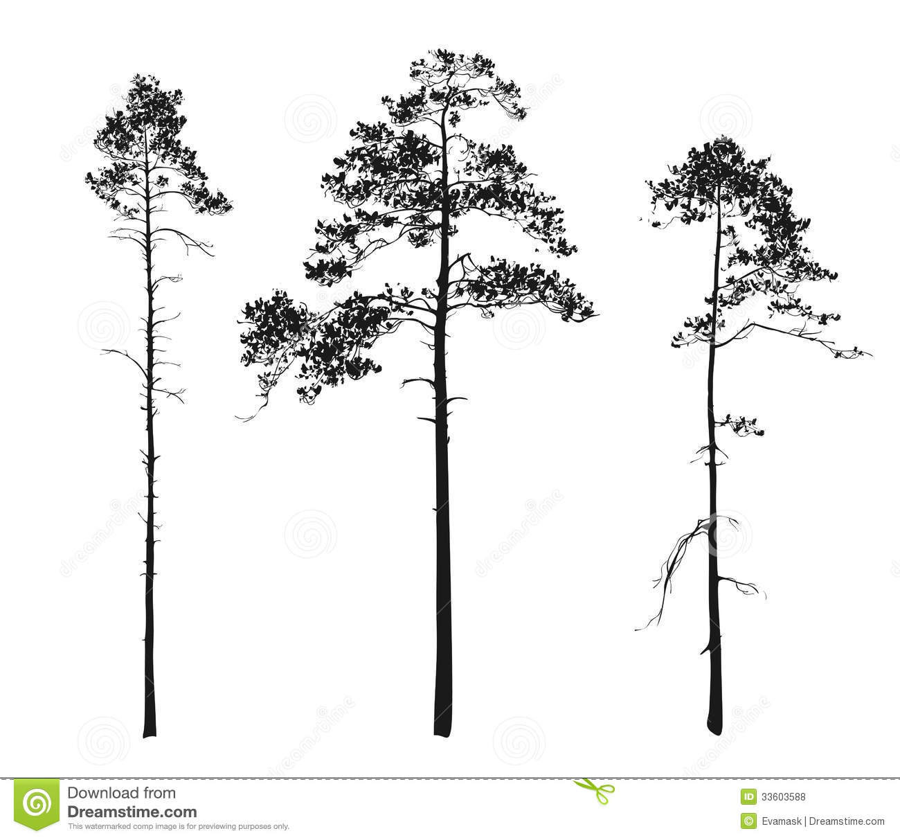 Silhouettes Of Trees Pine Stock Vector Illustration Of Large 33603588