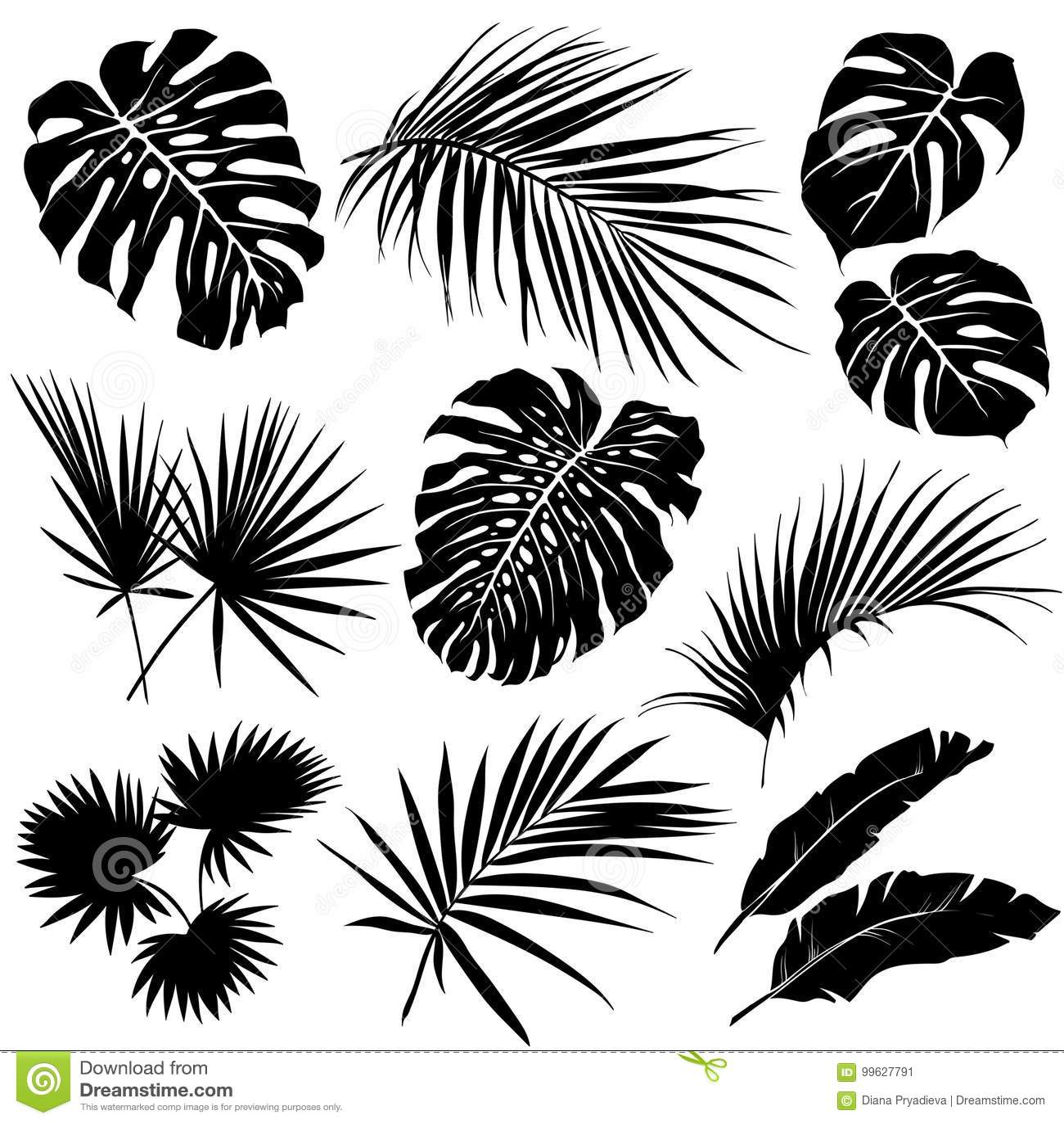 Tropical Leaves Black White Stock Illustrations 24 446 Tropical Leaves Black White Stock Illustrations Vectors Clipart Dreamstime Vectores, imágenes y arte vectorial de stock sobre. dreamstime com