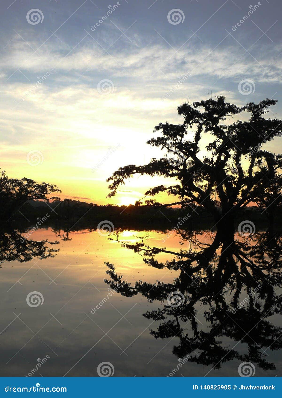Silhoutten av ett träd över en sjö under solnedgång i turnerar i cuyabenoen, den största nationalparken i ecuadorian amazone