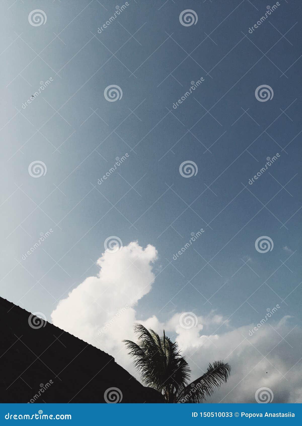 Silhueta da palma e do telhado no céu nebuloso azul no fundo
