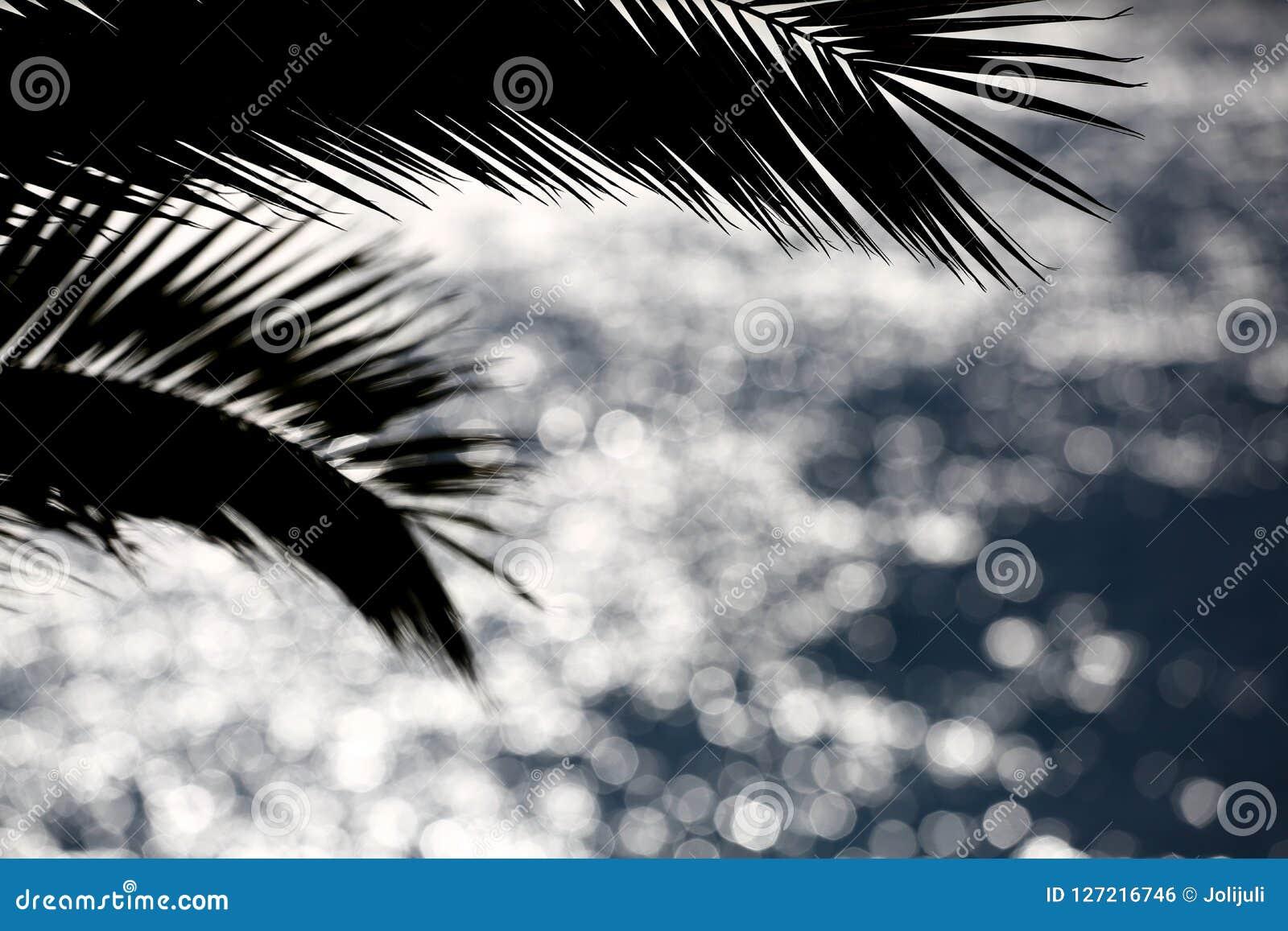 Silhueta da palmeira