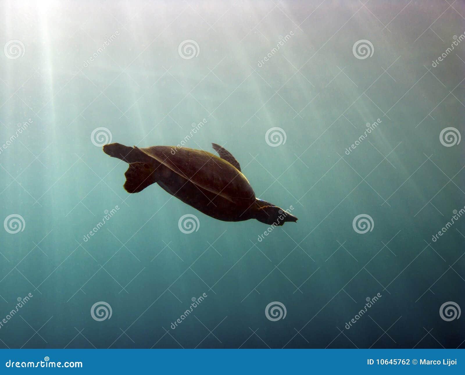 Silhueta da tartaruga com sunbeams