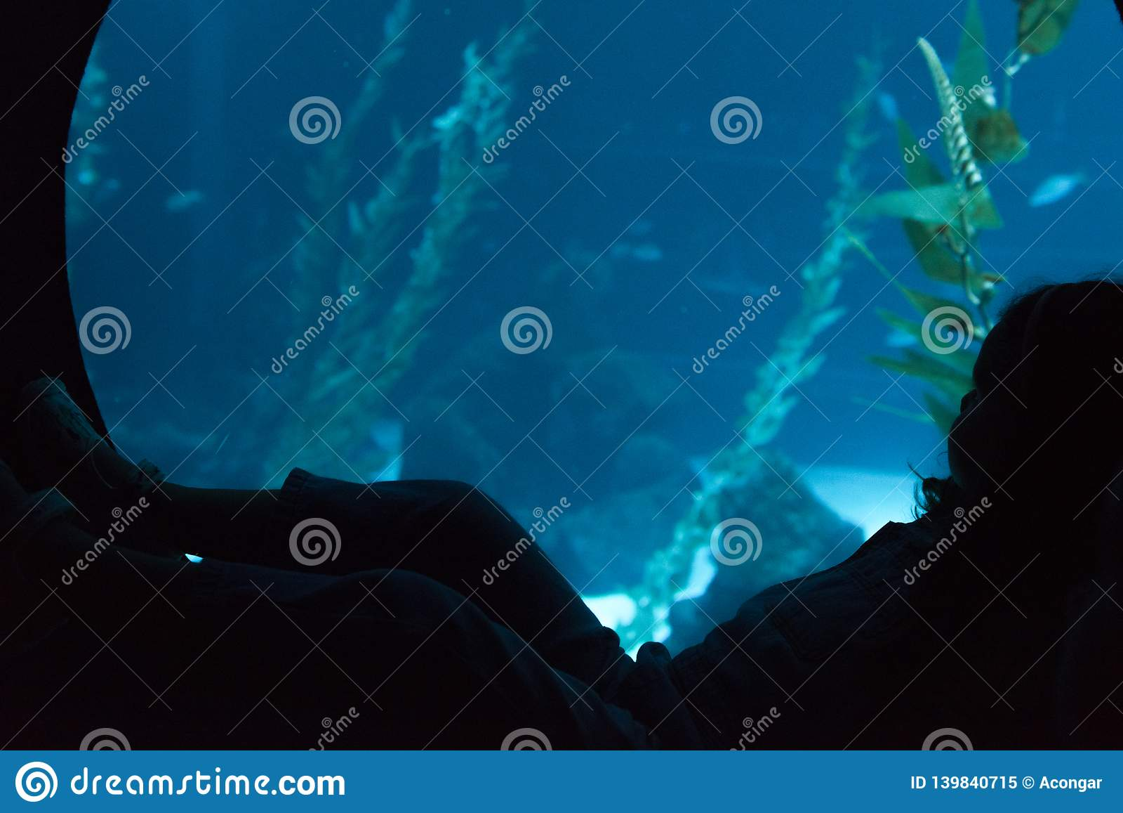 Silhueta de uma criança pequena que olha através do vidro no aquário