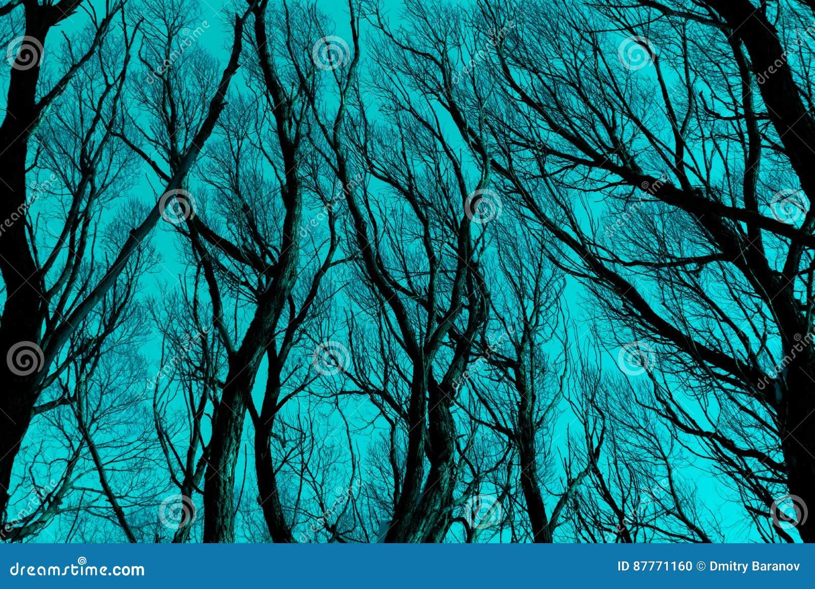 Silhueta desencapada dos ramos contra o céu azul ciano