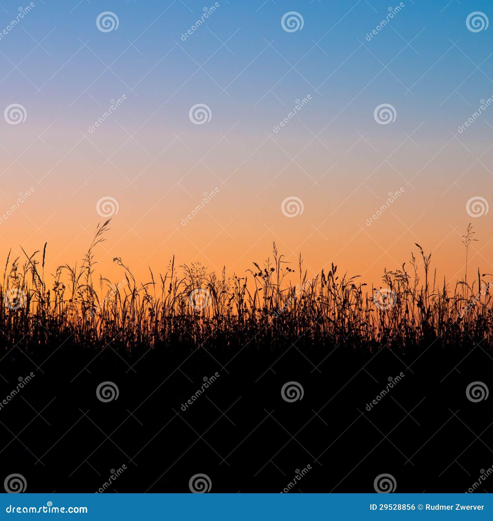 Silhueta do campo de grama