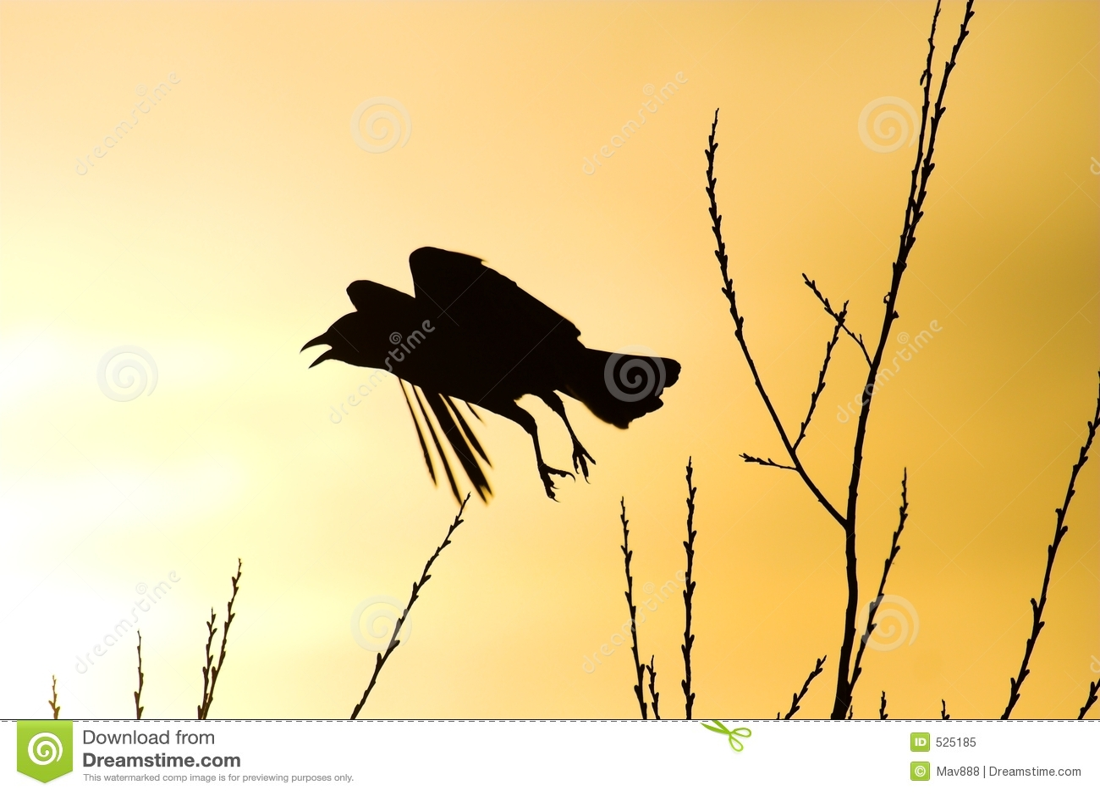 Silhueta do corvo