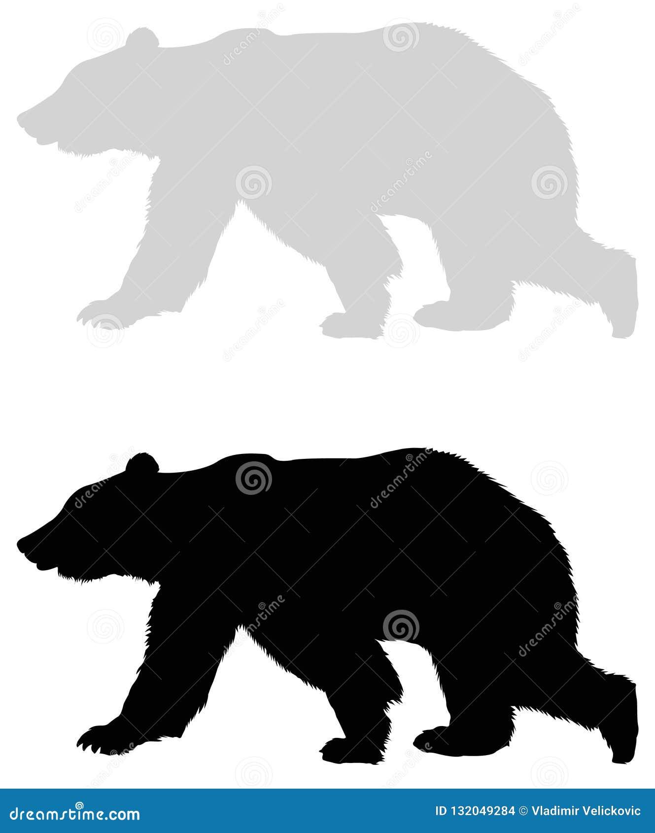 Silhueta do urso - animal dos animais selvagens