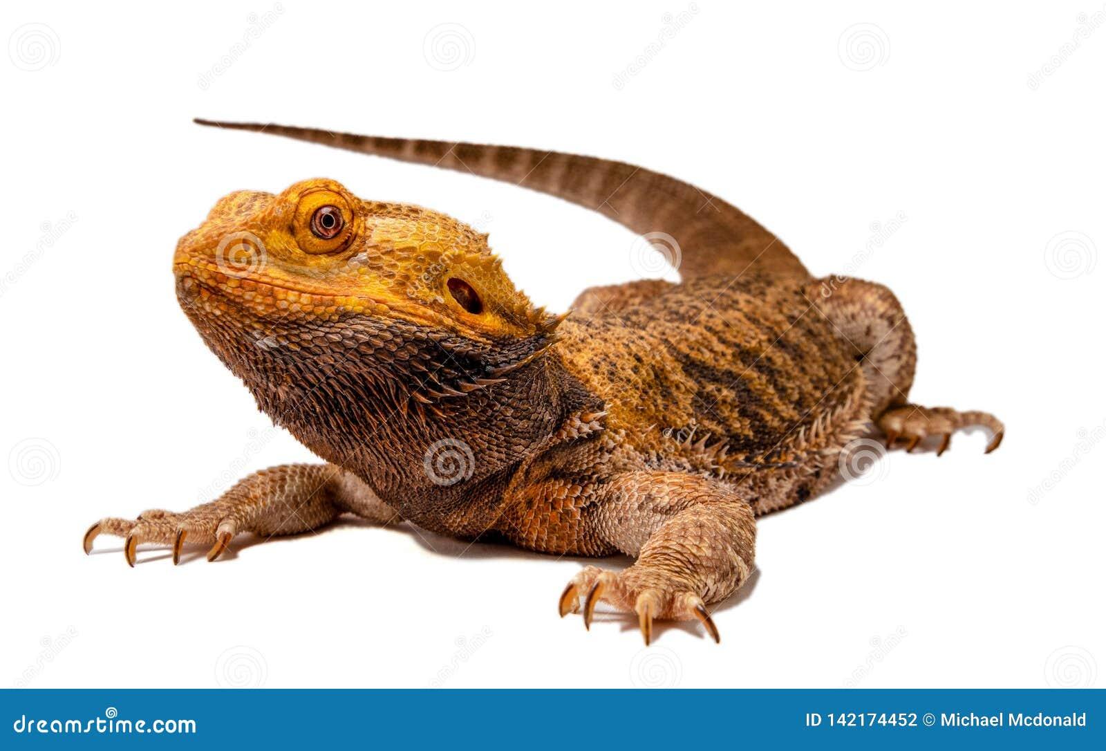 Silhueta farpada irritada do dragão
