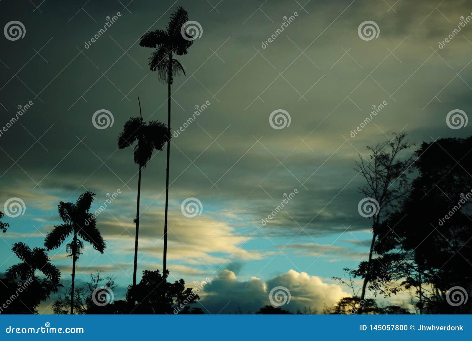 Silhuetas da árvore das palmeiras e uma árvore velha com um céu vívido do azul e o branco no fundo