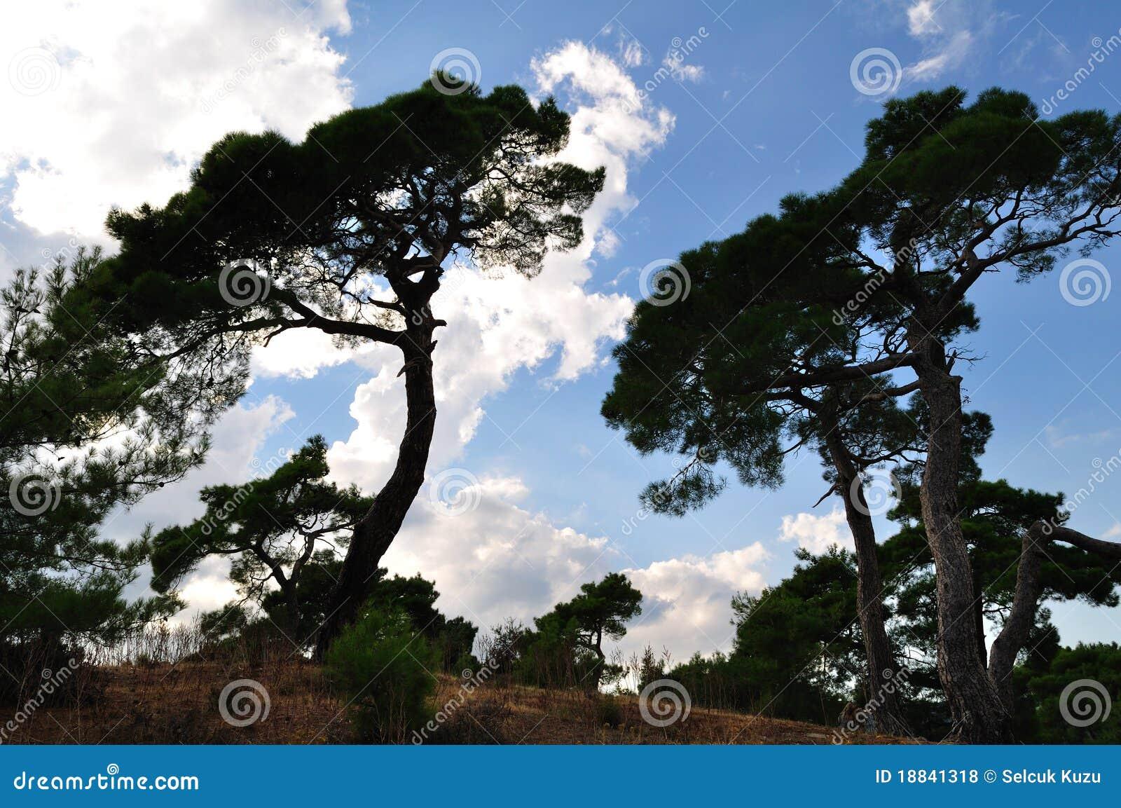 Silhuetas da árvore sobre o céu