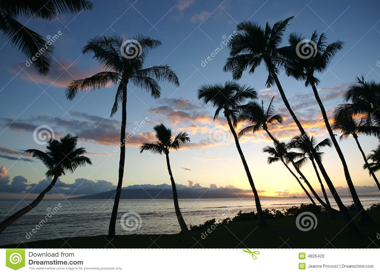 Silhuetas da palmeira