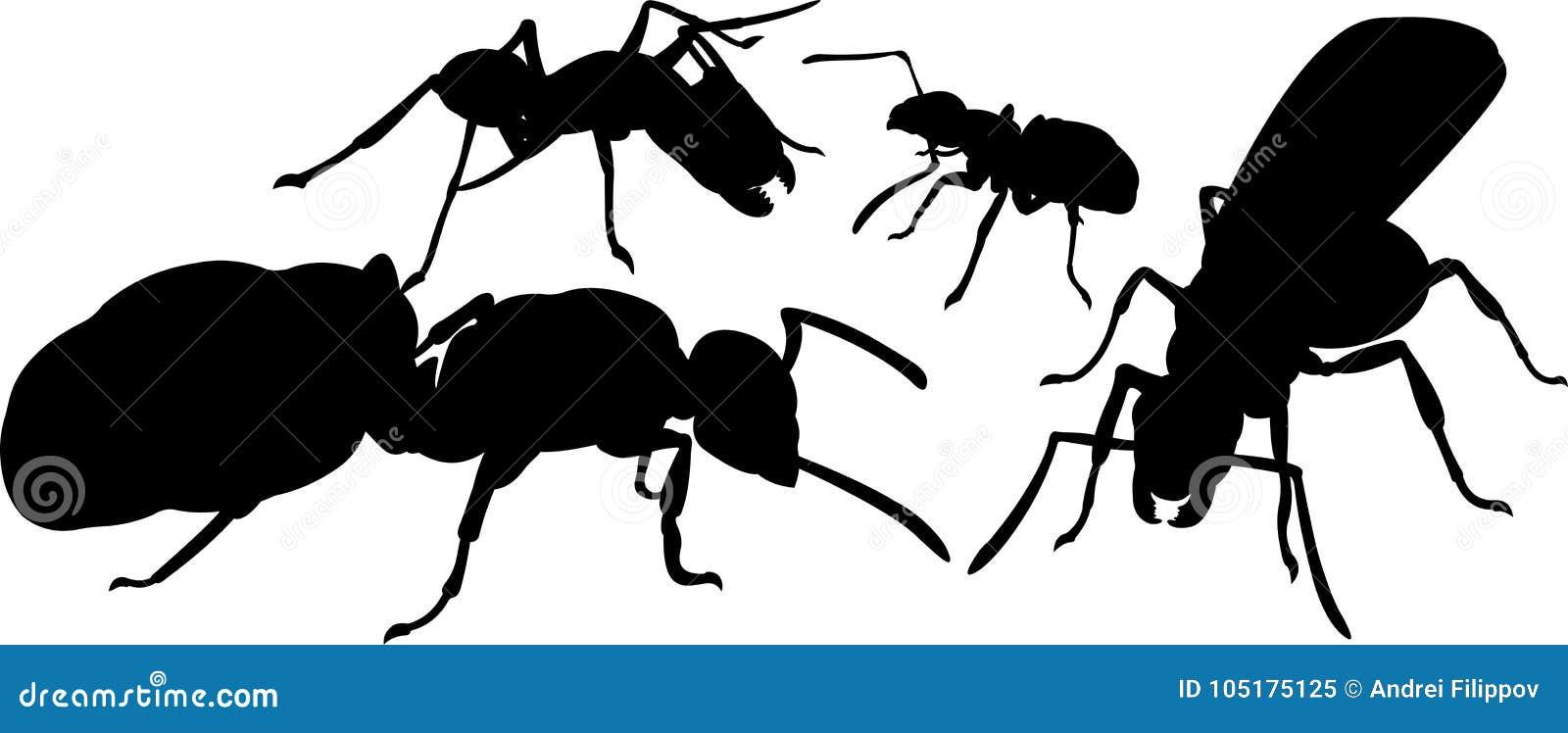 Silhuetas de formigas diferentes