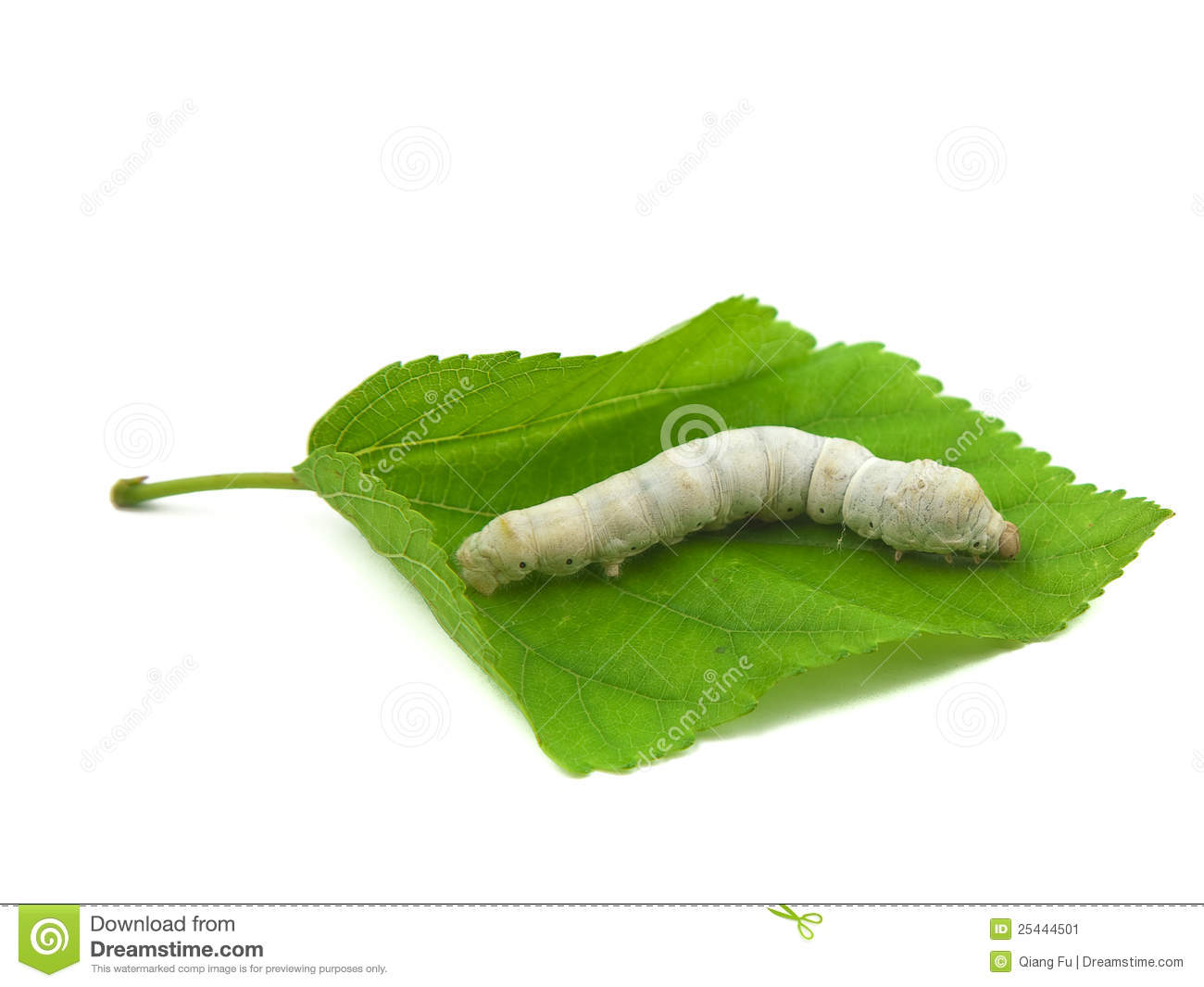 Silkworm In Mulberry Leaf Stock Image Image 25444501
