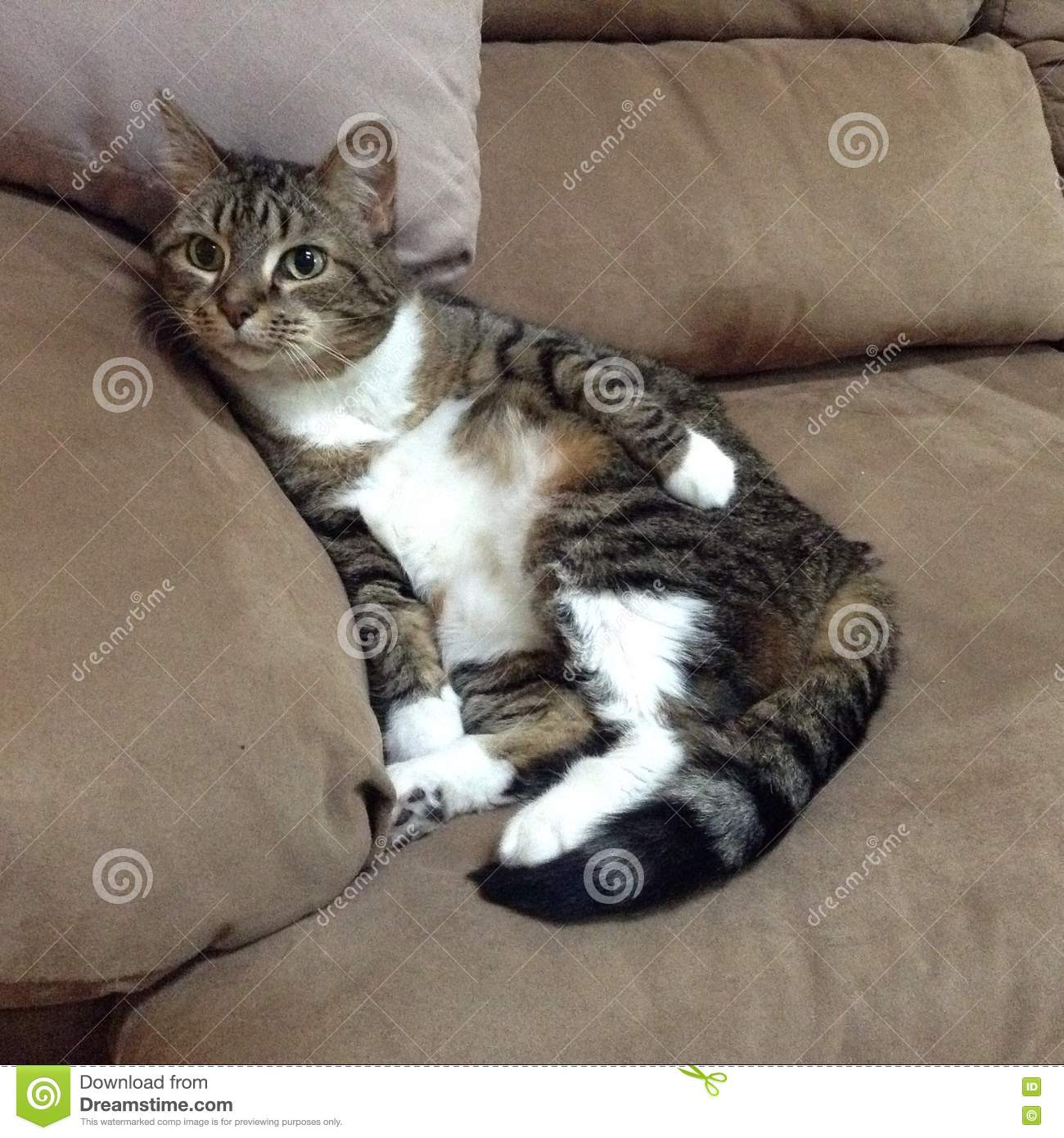 Silly Cat Stock Image
