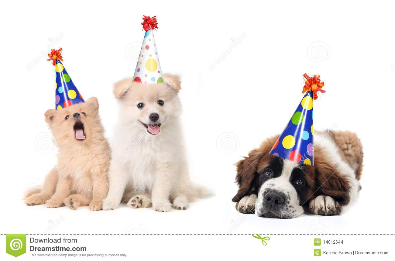 Silly Celebrating Birthday Puppies Stock Images - Image: 14012644