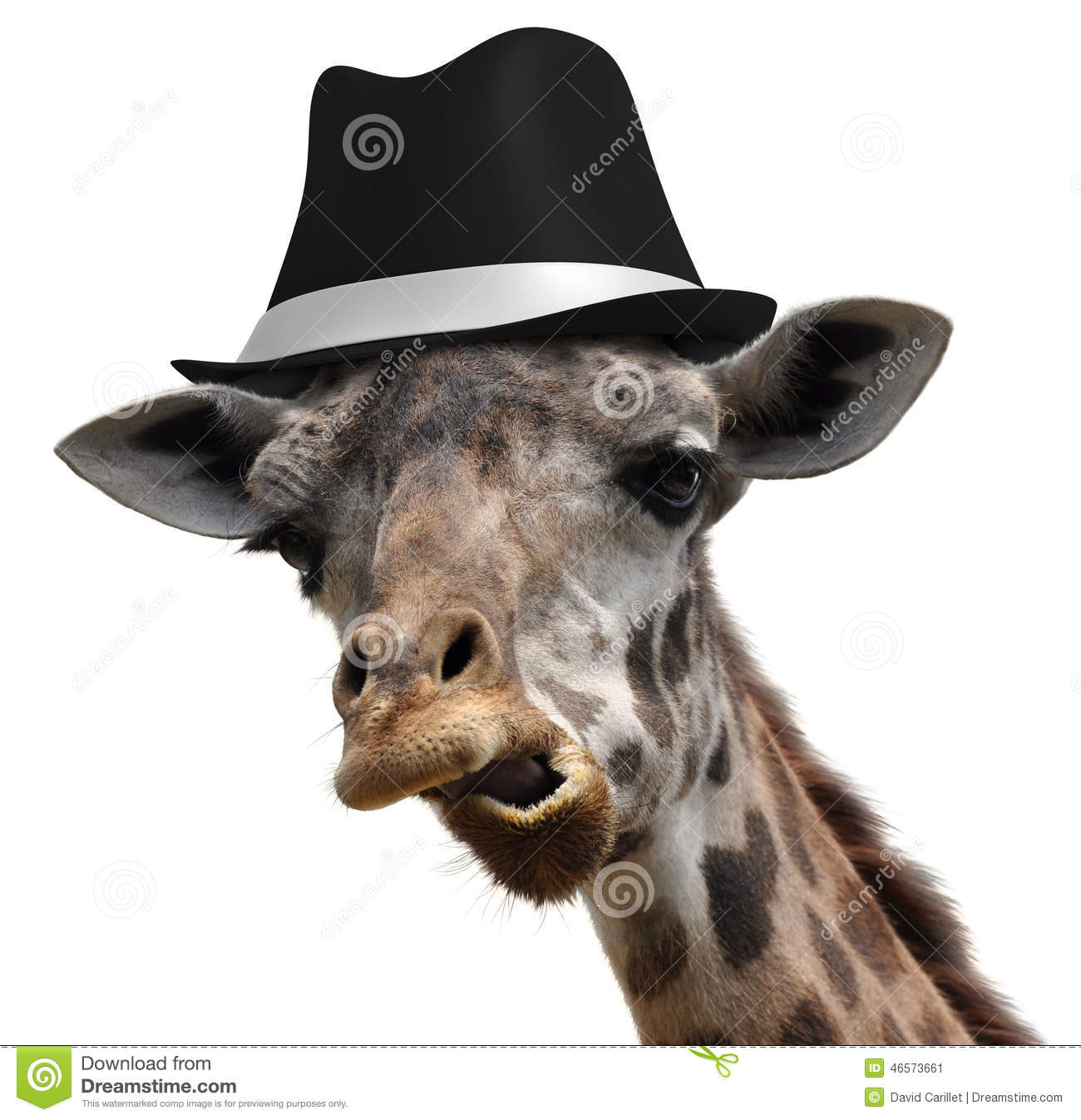Silly giraffe wearing a fedora and making an unusual face