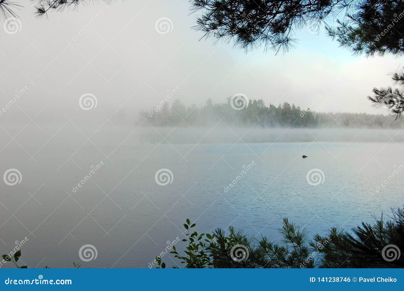 Silna mgła
