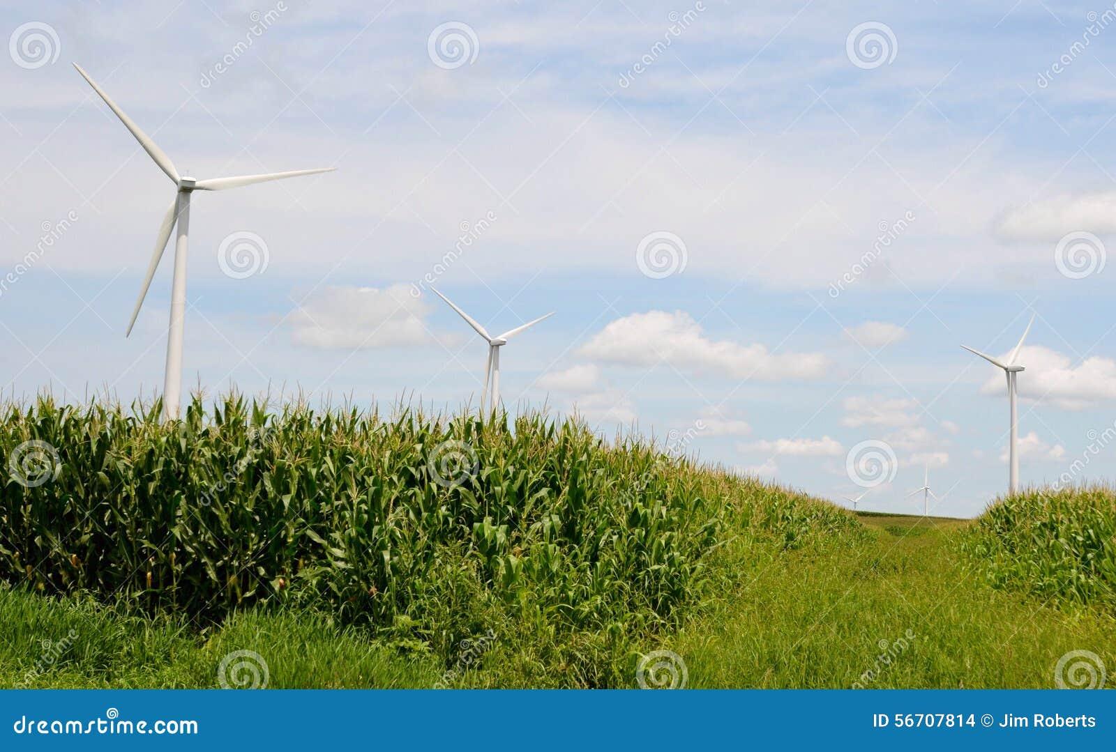 Silniki Wiatrowi w Kukurydzanym polu