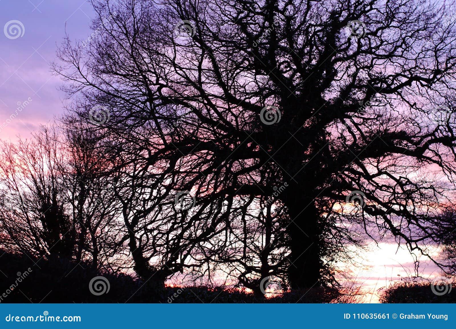 Silouette dell albero della Suffolk