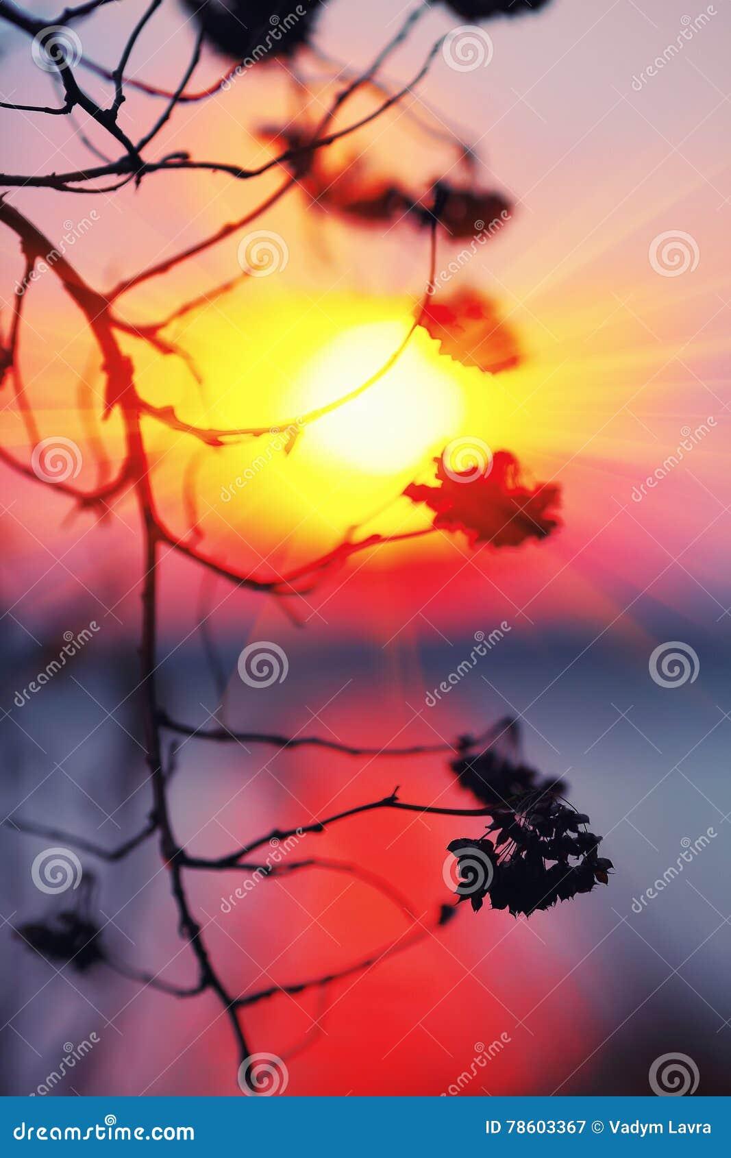 Silueta abstracta de la planta en la puesta del sol