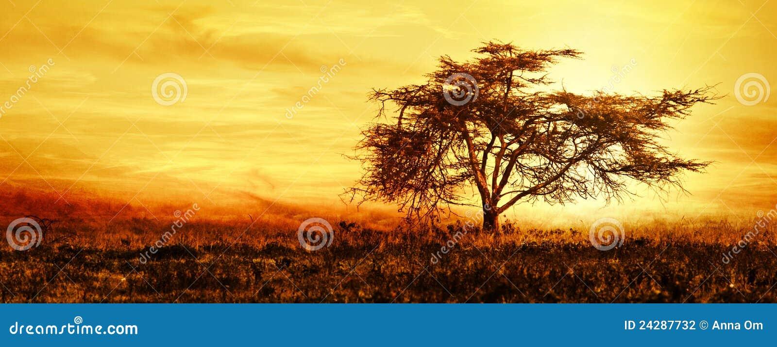 Silueta africana grande del árbol sobre puesta del sol