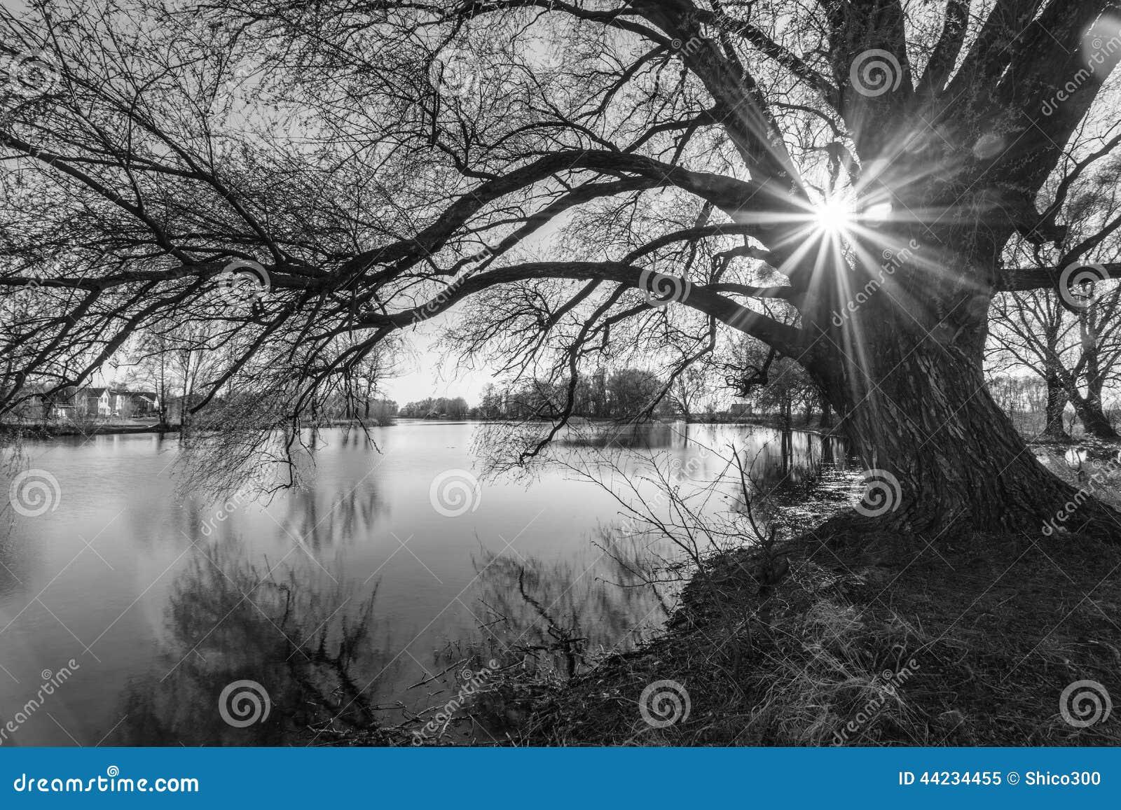 Silueta blanco y negro del árbol en tiempo de la salida del sol