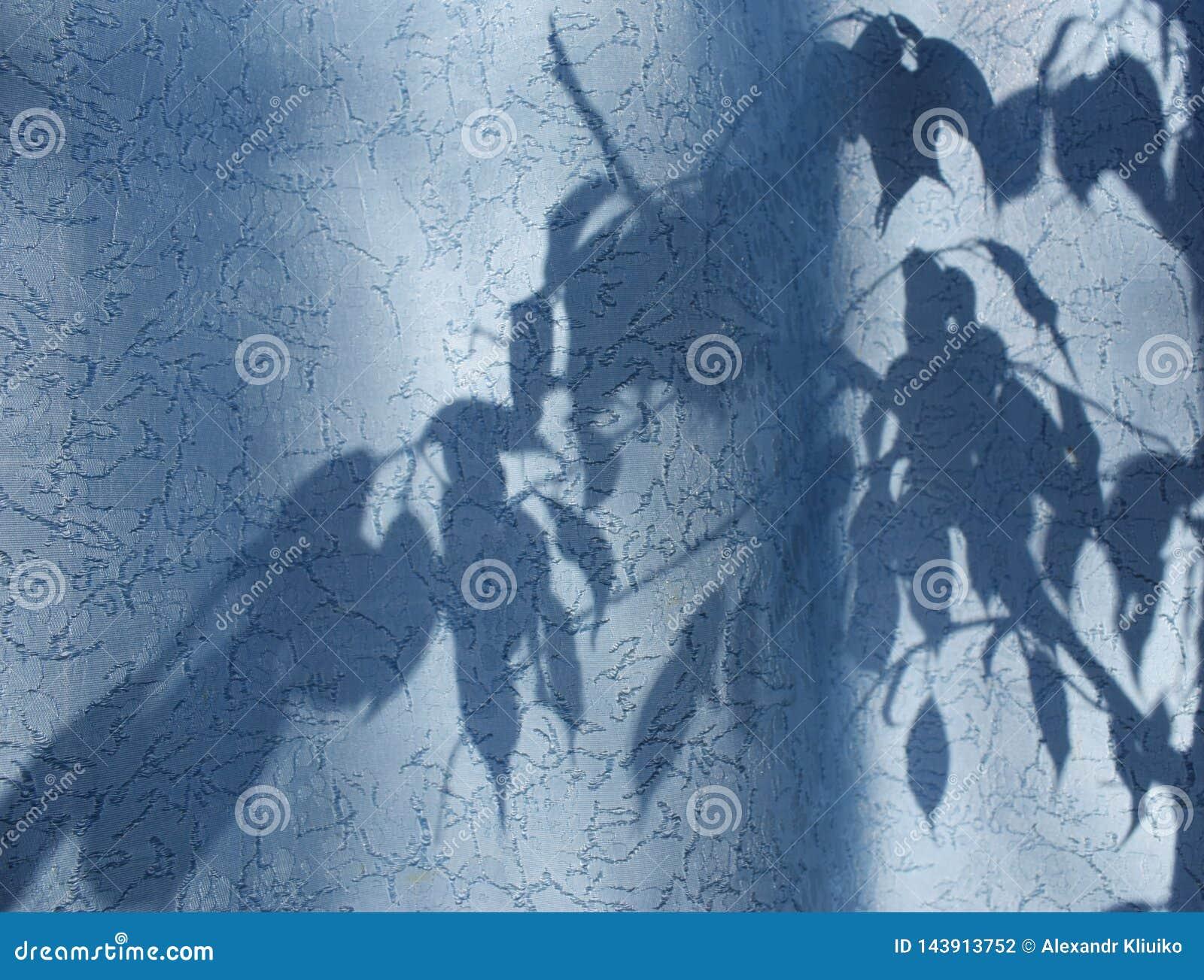 Silueta de hojas y de ramas en una cortina azul, las cortinas o Tulle en el fondo del sol