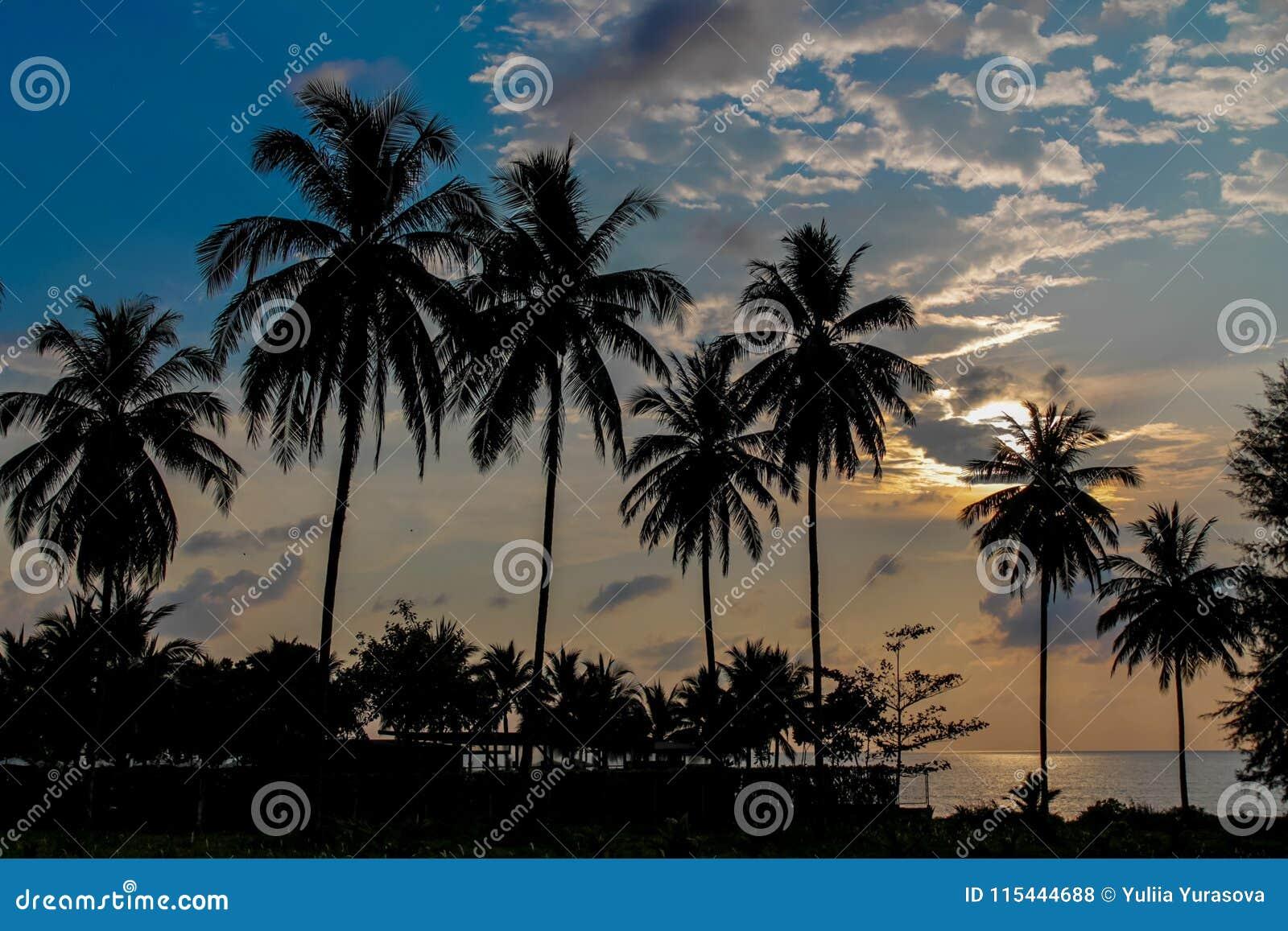 Silueta de la puesta del sol de las palmeras en el centro for Centro turistico puesta del sol
